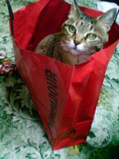 パン屋でお買い物?②